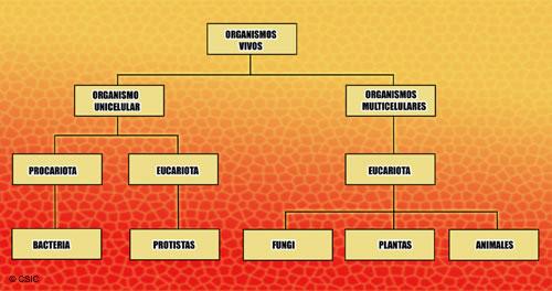 clasificación de los organismos vivos